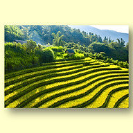 Tranh Canvas Phong Cảnh Vùng Cao Tây Bắc Mùa Lúa Chín - Công Nghệ In UV Nhật Bản - Màu Sắc Đẹp Sắc Nét thumbnail