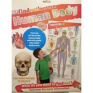 DKfindout Human Body Poster thumbnail