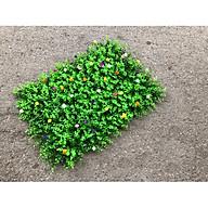 Combo 5 tấm cỏ tai chuột đính hoa nhỏ thumbnail
