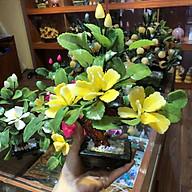Cây Hoa Đá Phong Thuỷ - Chiêu Tài Chiêu Lộc - để bàn làm việc, phòng khách, làm quà tặng thumbnail