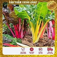 Hạt giống rau Cải Cầu Vồng ( 25-30 hạt)