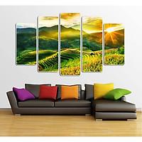 Bộ 5 tấm tranh treo tường Ruộng Bậc Thang 21 /Gỗ nhập khẩu Hàn Quốc-Bo viền,chống lóa,ẩm mốc,mối mọt