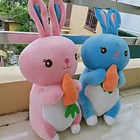 Combo Gấu bông thỏ ôm cà rốt  đáng yêu 50cm
