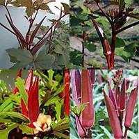 Hạt giống Đậu Bắp Đỏ RADO 309 (2g/gói) | Trái màu đỏ đậm, ngọt, ít xơ