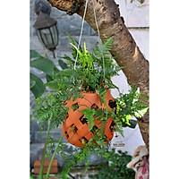 Chậu treo trồng cây KIỂU LỘNG size 20cm - gốm đất nung Bình Dương chất lượng cao