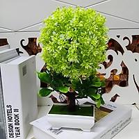 Chậu Hoa Bonsai trang trí để bàn màu Xanh lục lam