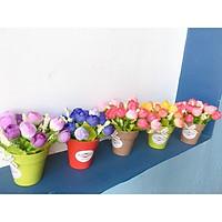 Chậu hoa nụ nhí xinh (HOA BÚP NỤ) GIAO MÀU NGẪU NHIÊN