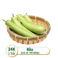 [Rau Củ Trái Cây - Giao nhanh HCM] Bầu  (1 -2 Trái - Khoảng 600g - 700g)