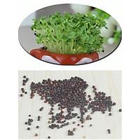 Hạt giống cỏ mầm, cỏ 4 lá, cỏ may mắn - kèm đất trồng