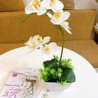 Hoa Giả Chậu Lan Cắm Sẵn Để Bàn