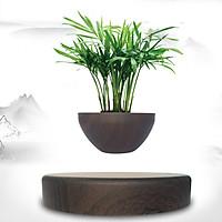 Chậu cây Bonsai bay nam châm lơ lững trang trí bàn làm việc (Không bao gồm cây)