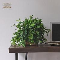 Chậu cây bình an | THE FISH SIZE L ( trang trí trong nhà, để bàn làm việc,...)