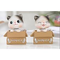 cặp mèo ly,hộp quà lưu niệm