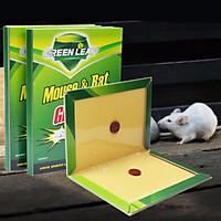 Keo bẫy chuột siêu dính