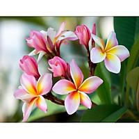 Tranh treo tường mẫu hoa sứ, hoa đại kích thước 50x75 tặng kèm đinh treo tranh