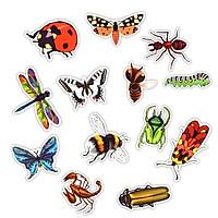 Set 30 Sticker côn trùng