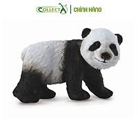 Mô hình thu nhỏ: Gấu Trúc con - Giant Panda Cub  - Standing, hiệu: CollectA, mã HS 9651221[88167] -  Chất liệu an toàn cho trẻ - Hàng chính hãng