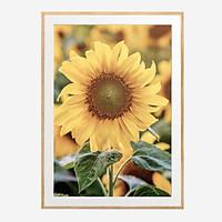 """Tranh trang trí khung kính gỗ sồi treo tường cao cấp """"Sunflower""""30x42cm"""