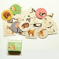 Label sticker hình mèo hộp 40 tấm mini