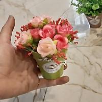 Chậu hoa nhí nhiều mẫu xinh (NHẤP MUA NGAY CHỌN PHÂN LOẠI HOA) màu ngẫu nhiên