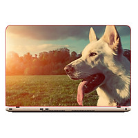 Mẫu Skin Dán Trang Trí Decal Laptop Animal DCLTDV 006
