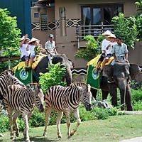 Vé Bali Safari Và Marine Park, Indonesia (Vé Dragon Pass)