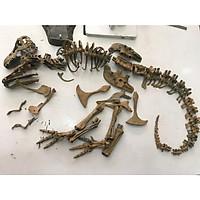 Mô hình xương khủng long bạo chúa hoá thạch
