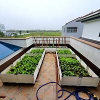 CHẬU GHÉP THÔNG MINH (50x50x23)Cm: Bền từ 8-10 năm, phù hợp mọi cây trồng và không gian, Module tùy biến kích thước, an toàn, trọng lượng nhẹ, kết cấu chắc chắn, có khay trữ và thoát nước.