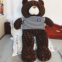 Thú bông Gấu Teddy màu nâu đen - Khổ vải 1M6 cao 1M4