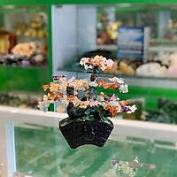Cây thạch anh lục sắc thân bonsai chậu kiểu nhật mới (Phước) FKC117