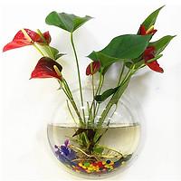 Bể cá mini treo tường, chậu hoa thủy sinh treo tường, nhựa thủy tinh acrylic đủ size