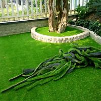 Combo 25m2 thảm cỏ nhân tạo dày 2cm