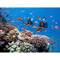Tour 3 đảo Deluxe Nha Trang bao gồm cano và ăn trưa, vé tham quan