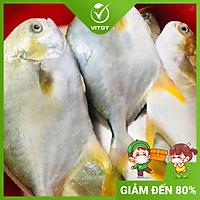 [CHỈ GIAO HN] - CÁ CHIM VÀNG ANH TƯƠI VITOT FOOD (600g - 1kg/ con)