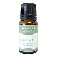 Tinh dầu bạch đàn xanh - Pure essential oil 10 ml - EUCALYPTUS RADIANTA