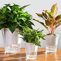 Chậu trồng cây tự thấm hút - Mẫu trong suốt RLU