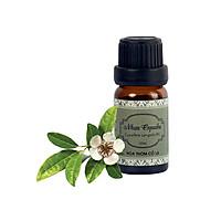 Tinh Dầu Nhựa Copaiba - Copaiba Balsam Essential Oil 10ml - Hoa Thơm Cỏ Lạ