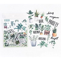 Combo 40 chiếc Sticker túi họa tiết chậu cây cảnh chữ tiếng Anh
