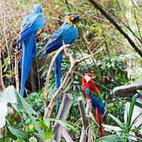 Vé Bali Safari Và Marine Park, Indonesia (Vé Night Safari Bali)