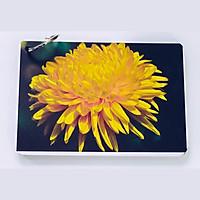 Bộ KatchUp Flashcard cho bé Tiếng Anh – Các loài hoa – High Quality