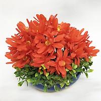 Chậu hoa giả cao cấp - Hoa Cúc pha lê - nhựa handmade (Đỏ 22x22cm)