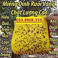 Bộ 10 miếng bẫy ruồi vàng dùng cho vườn lan, cây ăn trái - Bẫy Dính Ruồi Vàng Siêu Hiệu Quả