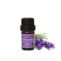 Tinh dầu Oải hương Bulgaria - Lavender Bulgaria Essential Oil 10ml - Hoa Thơm Cỏ Lạ