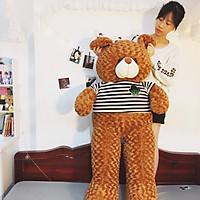 Thú bông Gấu Teddy màu nâu - Khổ vải 1M4 cao 1M2