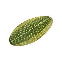 Thảm chùi chân chống trượt hình chiếc lá