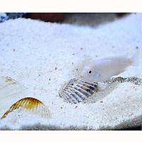 1KG Cát thạch anh lọc nước bể cá, nước sinh hoạt, trải nền, làm thác cát, trang trí bể cá,