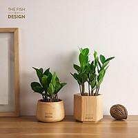 Chậu cây kim tiền | THE FISH SIZE M ( trang trí nhà cửa, để bàn làm việc,...)