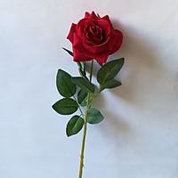 1 đóa hoa hồng nhung đường kính hoa 10cm