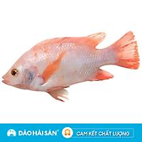 [Chỉ giao HCM] - Cá Diêu Hồng Sống ( Con )