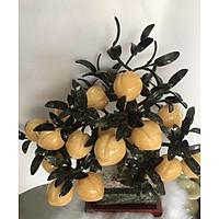 Cây Tài Lộc - Đào đá ngọc hoàng long vàng 18 quả to nặng 8,15kg - chậu chữ nhật - kèm đế gỗ